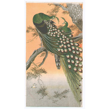小原古邨: Peafowls (Muller Collection) - Artelino