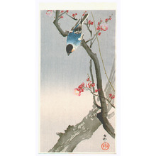 Ohara Koson: Bullfinch on Plum Tree (Muller Collection) - Artelino