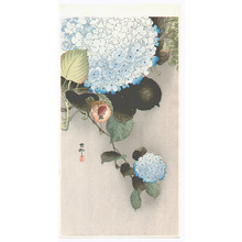 Ohara Koson: Sparrow on Hydrangea (Muller Collection) - Artelino