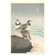 小原古邨: Plover near Seaside - Artelino