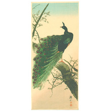 Ito Sozan: Peacock (Muller Collection) - Artelino