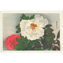 織田一磨: Peonies (Muller Collection) - Artelino