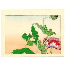 Shibata Zeshin: Poppy - Hana Kurabe - Artelino