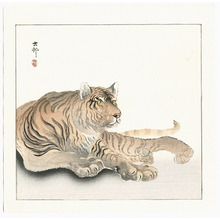 小原古邨: Reclining Tiger (Muller Collection) - Artelino