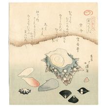 Totoya Hokkei: Seashells (surimono) - Artelino