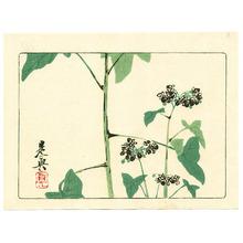 Shibata Zeshin: Flowering Plant - Hana Kurabe - Artelino