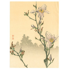 古峰: Magnolia (Muller Collection) - Artelino