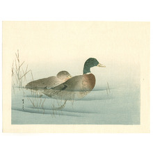 Watanabe Seitei: Two Mallard Ducks (Muller Collection) - Artelino