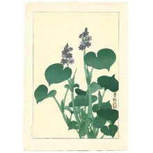 Ohara Koson: Purple Flowering Hosta (Muller Collection) - Artelino