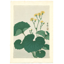 Ohara Koson: Ligularia (Muller Collection) - Artelino