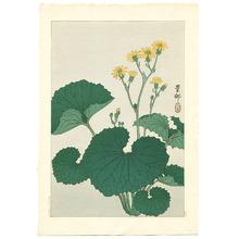 Ohara Koson: Ligularia (Muller Collection) - Artelino