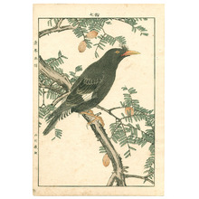 Imao Keinen: Exotic Bird and Plant - Keinen Gafu - Artelino