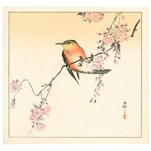 小原古邨: Red Bird and Cherry Blossoms - Artelino