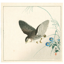 小原古邨: Quail and Blue Flowers - Artelino