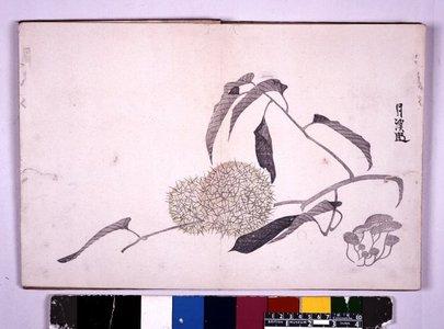 呉春: Kokoro no nezashi 心の根ざし - 大英博物館