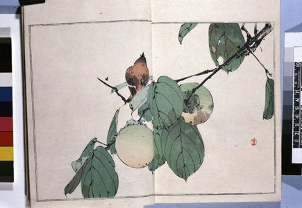 渡辺省亭: Seitei kacho gafu 省亭花鳥画譜 (Seitei's Birds and Flowers Painting Manual) - 大英博物館