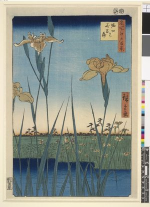 Utagawa Hiroshige: Horikiri no hana-shobu 堀切ノ花菖蒲 (Flowering Irises at Horikiri) / Meisho Edo hyakkei 名所江戸百景 (One Hundred Famous Views in Edo) - British Museum