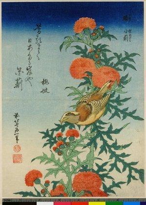 Katsushika Hokusai: Isuka kani-azami - British Museum