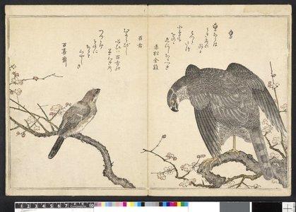 Kitagawa Utamaro: Momo chidori kyoka-awase 百千鳥狂歌合 (Myriad Birds: A Kyoka Competition) - British Museum