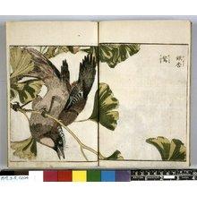 Kitao Shigemasa: (Shashin) Kacho Zue - British Museum