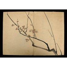 Shibata Zeshin: Zeshin iboku Tairyukyo gafu - British Museum