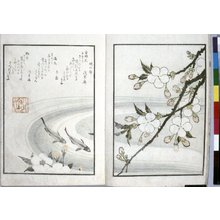 Totoya Hokkei: Sansai hana hyakushu 三才花百首 (Three Aspects of Flowers in a Collection of One Hundred Verses) - British Museum