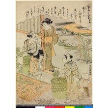 Kitao Shigemasa: Dai-go / Kaiko Yashinai-gusa - British Museum