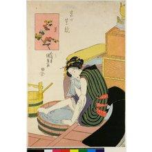 歌川国貞: Kiku / Tosei hana kurabe - 大英博物館