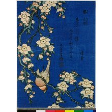 葛飾北斎: Uso shidare-zakura - 大英博物館