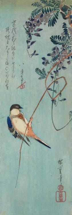 Utagawa Hiroshige: Great Titmouse on Wisteria - University of Wisconsin-Madison