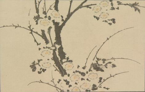 葛飾北斎: Untitled (Plum Blossoms), from the portfolio Hokusai's Shashin Gwofu - ウィスコンシン大学マディソン校