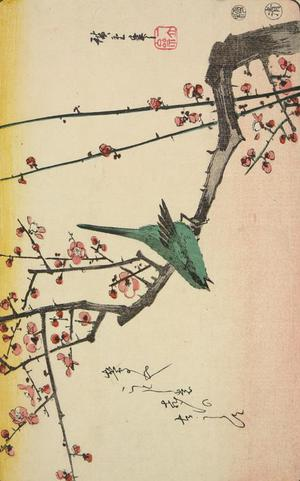 歌川広重: Warbler on a Plum Branch, from a series of Bird and Flower Subjects - ウィスコンシン大学マディソン校