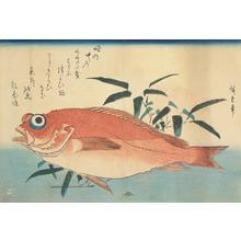 Utagawa Hiroshige: Ako and Bamboo Grass, from a series of Fish Subjects - University of Wisconsin-Madison