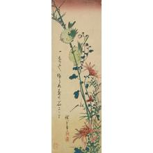 Utagawa Hiroshige: White-eyes and Wild Chrysanthemums (Zosterops Japonica) (Mejiro)) - University of Wisconsin-Madison