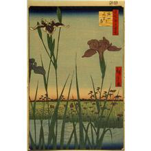 歌川広重: Irises at Horikiri, no. 56 from the series One-hundred Views of Famous Places in Edo - ウィスコンシン大学マディソン校