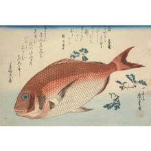 Utagawa Hiroshige: Sea Bream and Sansho, from a series of Fish Subjects - University of Wisconsin-Madison