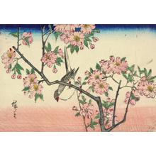 Utagawa Hiroshige: Great Titmouse in a Cherry Tree - University of Wisconsin-Madison