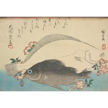 歌川広重: Flounder, Mebaru and Cherry Blossoms, from a series of Fish Subjects - ウィスコンシン大学マディソン校