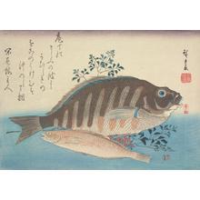 歌川広重: Shimadai, Ainame, and Nandina, from a series of Fish Subjects - ウィスコンシン大学マディソン校