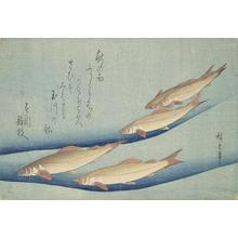 歌川広重: Trout, from a series of Fish Subjects - ウィスコンシン大学マディソン校