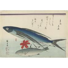 歌川広重: Flying Fish, Ishimochi, and Lily, from a series of Fish Subjects - ウィスコンシン大学マディソン校