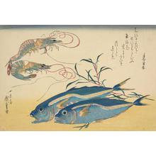 Utagawa Hiroshige: Two Fish and Two Shrimp, from a series of Fish Subjects - University of Wisconsin-Madison