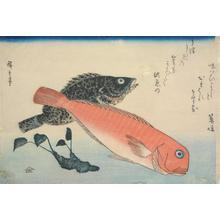 歌川広重: Amadai, Mebaru and Wasabi Root, from a series of Fish Subjects - ウィスコンシン大学マディソン校
