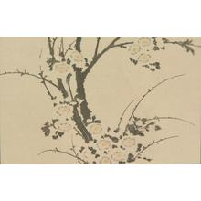 葛飾北斎: Untitled (Plum Blossoms), from the portfolio Hokusai's Shashin Gwofu - ウィスコンシン大学マディソン校