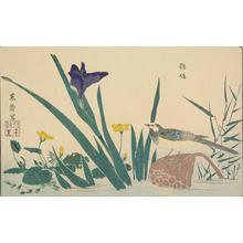 北尾政美: Lotus, Iris and Wagtail, from the series A Mirror of Birds and Flowers - ウィスコンシン大学マディソン校