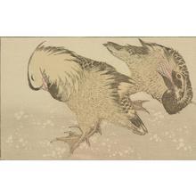 葛飾北斎: Untitled (Two Ducks), from the portfolio Hokusai's Shashin Gwofu - ウィスコンシン大学マディソン校