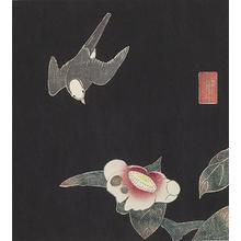 伊藤若冲: Swallow and Camellia, no. 4 or 6 from the series Six Genuine Pictures by Ito Jakuchu - ウィスコンシン大学マディソン校