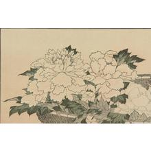 Katsushika Hokusai: Untitled (Peonies), from the portfolio Hokusai's Shashin Gwofu - University of Wisconsin-Madison