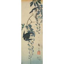 Utagawa Hiroshige: Swallows and Wisteria, from a series of Bird and Flowers Subjects - University of Wisconsin-Madison