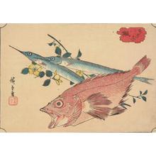 歌川広重: Kasago and Sayori, from a series of Fish Subjects - ウィスコンシン大学マディソン校